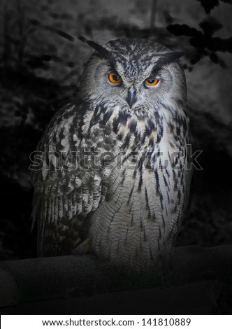 The evil eyes in the night. ( Eagle Owl, Bubo bubo). Halloween theme. - stock photo