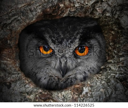 The evil eyes. The Eagle Owl (Bubo bubo) in a hollow tree. - stock photo