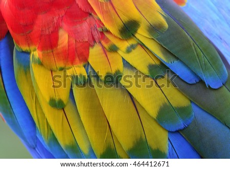 The exotic colorful background of bird feathers, the fascinated Scaret Macaw bird's wing texture