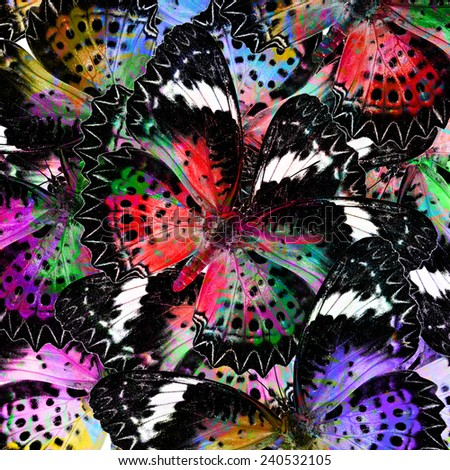 The Exotic Colorful Background Pattern made of Leopard Lacewing butterflies in fresh colors - stock photo