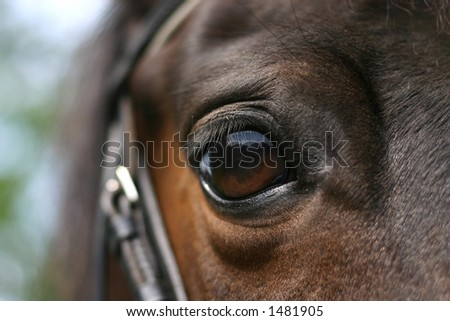 The eye of a bay pony