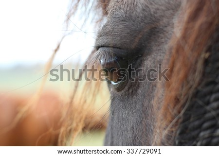 The eye of a horse, filmed from half side,half back - stock photo