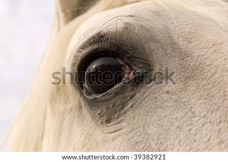 The eye of the horse. - stock photo