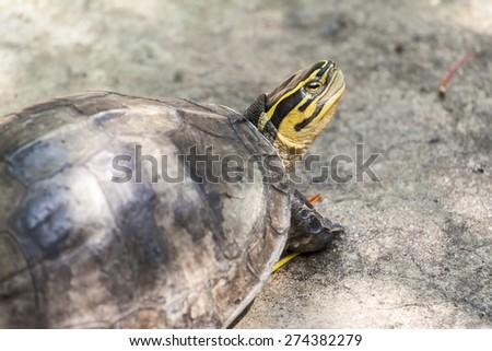 The eye of the tortoise - head tortoise. - stock photo