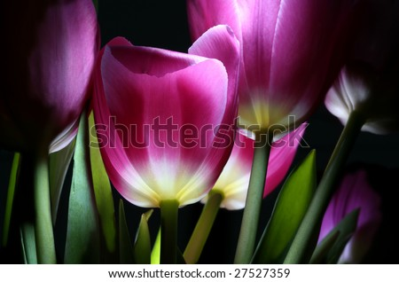 the fairy-tale tulips by pervaded bright light in night town garden - stock photo