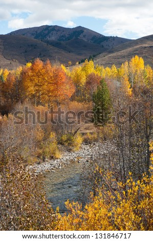 The fall colors of Sun Valley, Idaho