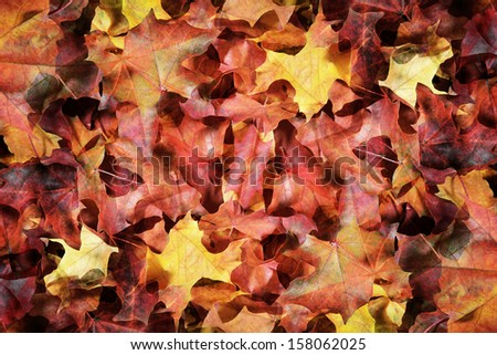 The fallen autumn leaves - stock photo