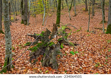 The fallen trees in the autumn forest - stock photo
