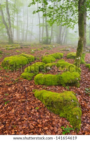 The falling leaves colors the autumn season in the forest, Monte Santiago, Burgos, Spain - stock photo