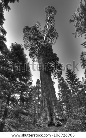 The famous General Grant Sequoia tree, the second biggest tree in the world. - stock photo