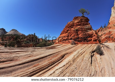 "The famous ""jumping tree""jerky tree.Picturesque striped hills from sandstone and low pines in National park Zion in the USA - stock photo"
