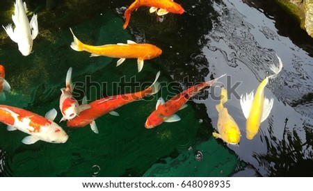 Beautiful koi fish swimming pond stock photo 110667110 for Japanese koi names