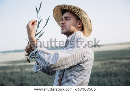 The farmer holds the wheat plant in his hands.