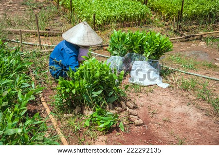 The farmer packing seedlings on the farm, Dong Nai province, Vietnam - stock photo