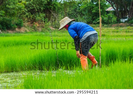 The farmer - Season Cultivation started. Thailand is everywhere.-Focus people - root crops blur