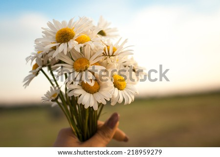 The female hand holding a bouquet of a camomile. outdoor shot - stock photo