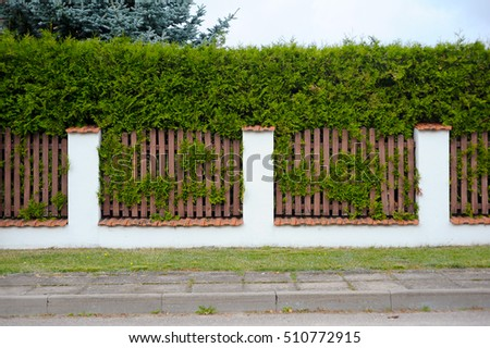 The fence and thuja tree wall