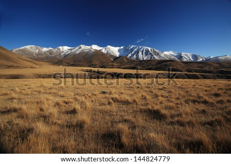 The Field Brown Grass with the snow mountain background in New Zealand - stock photo