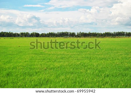 The field that far away from the city - stock photo