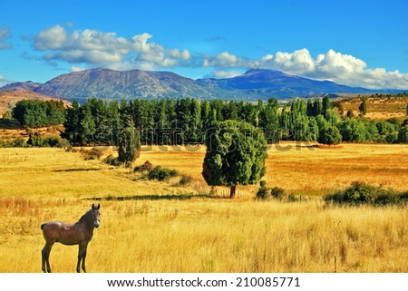 The fields after the harvest. On the side is green avenue of trees. The farmer horse is in the field grazed. South America, Chile - stock photo