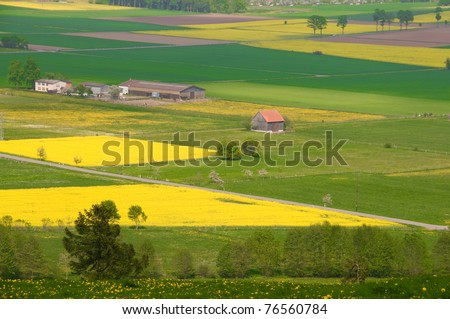 The fields of flowering rapeseed from bird's-eye view.
