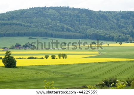 The fields of flowering rapeseed village. - stock photo