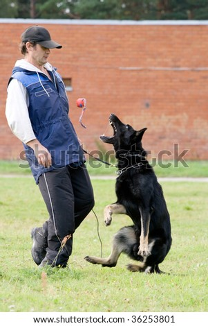 The figurant playing with German shepherd - stock photo