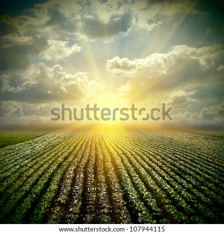 The fine cabbage field wis sky - stock photo