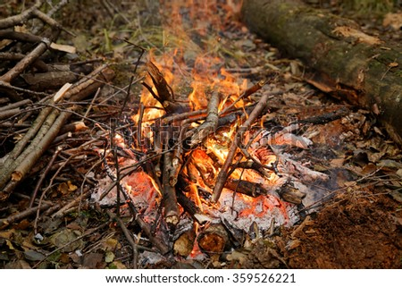 The fire in the forest. Hike.