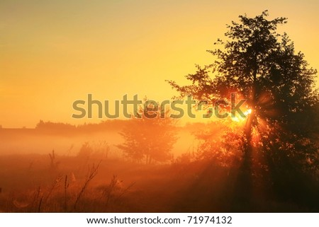 The first rays of the rising sun pass through the fog - stock photo