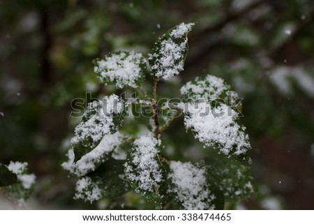 The first snow fell on the leaves