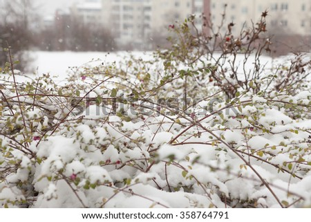 The first snowstorm in Berlin in January - stock photo