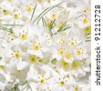 The first spring flowers, white bouquet (wedding background) - stock photo