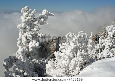 The first storm of the winter on the top of the Sandia Mountains coats the trees, plants and cliffs with ice and snow as the clouds hover around the mountaintops. - stock photo