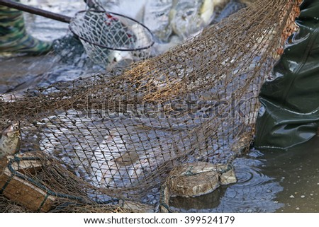 The fish in the water fishing nets - stock photo