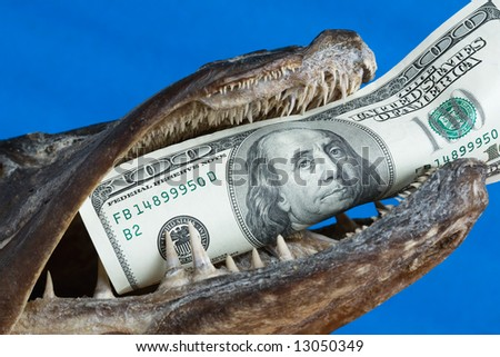 The fish mouth holds dollar on blue background - stock photo