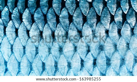 The fish scale close up. - stock photo