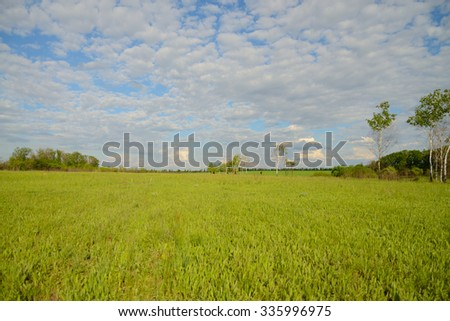 The flat landscape, clouds floating over the field, summer
