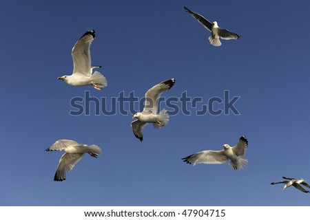 The flight of gulls in the sky - stock photo