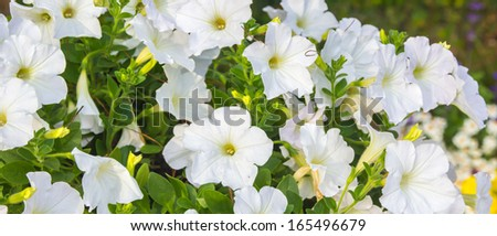 The flower background - stock photo
