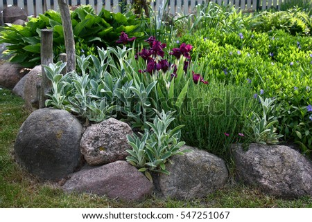 Genial The Flower Bed With Blossoming Irises And Vinca Is Limited By The Big Stones ./