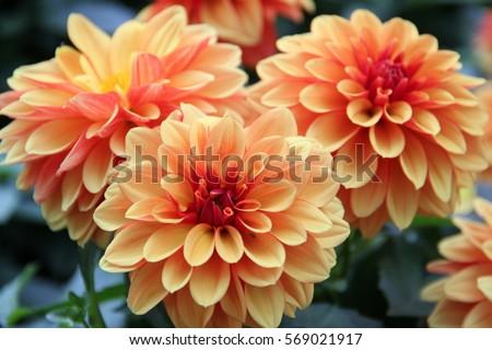 Flower flower colorful beautiful flower orange 569021917 the flower flower colorful beautiful flower orange flower voltagebd Gallery