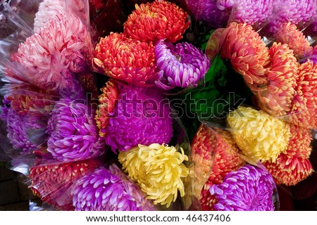 The Flower Market in Hong Kong. - stock photo