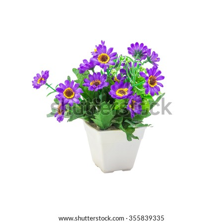 The flowers in pot isolated  on white background with clipping path.
