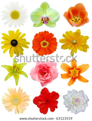 The flowers set in US - stock photo