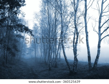 the fog on the forest boundary; blue filter effect