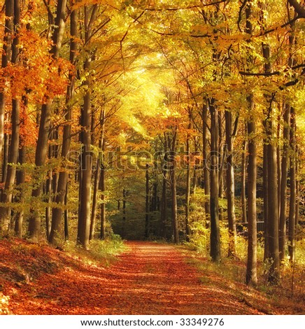 The forest in autumn - colorful - stock photo