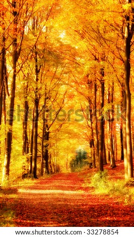 The forest in autumn - golden paradise - stock photo
