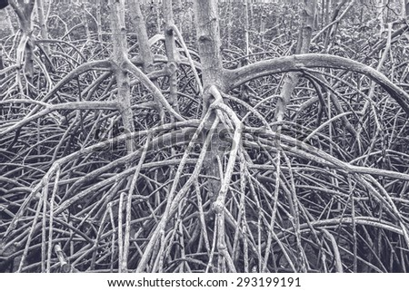 The forest mangrove at Petchaburi, Thailand processed in tinted photo - stock photo