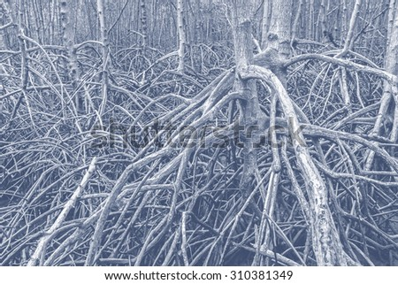 The forest mangrove at Petchaburi, Thailand processed in tinted photo in blue tone - stock photo
